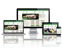 Camden Housing Authority - Responsive Website